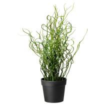 Искусственное растение в горшке ФЕЙКА артикуль № 301.769.79 в наличии. Онлайн каталог ИКЕА РБ. Недорогая доставка и соборка.