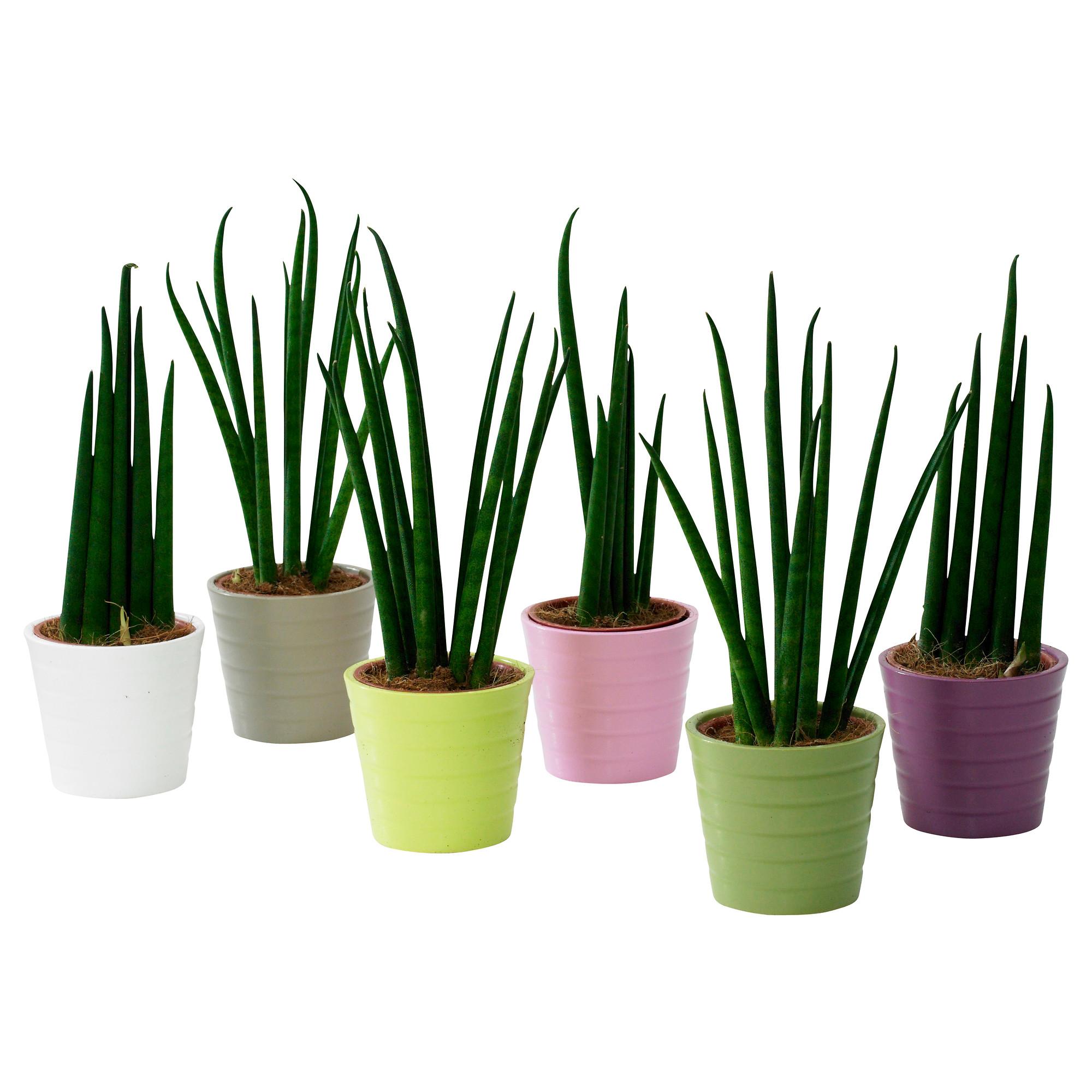 Badezimmer Pflanzen