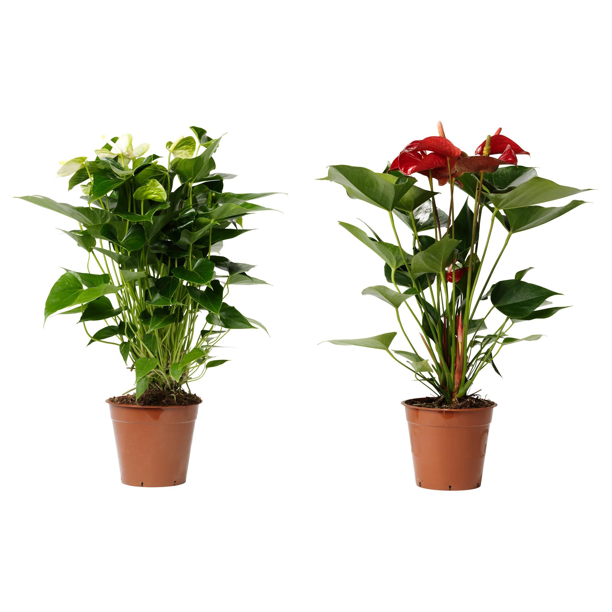 Купить комнатный цветок в минске, корзины цветов