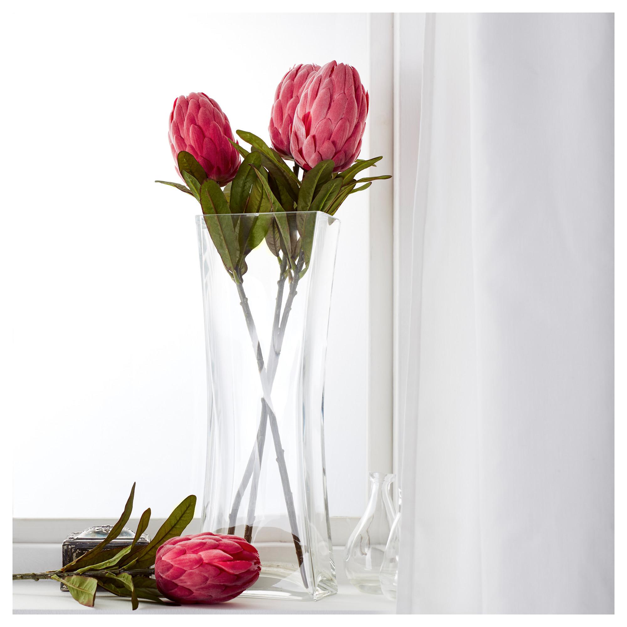 протея цветок фото и описание