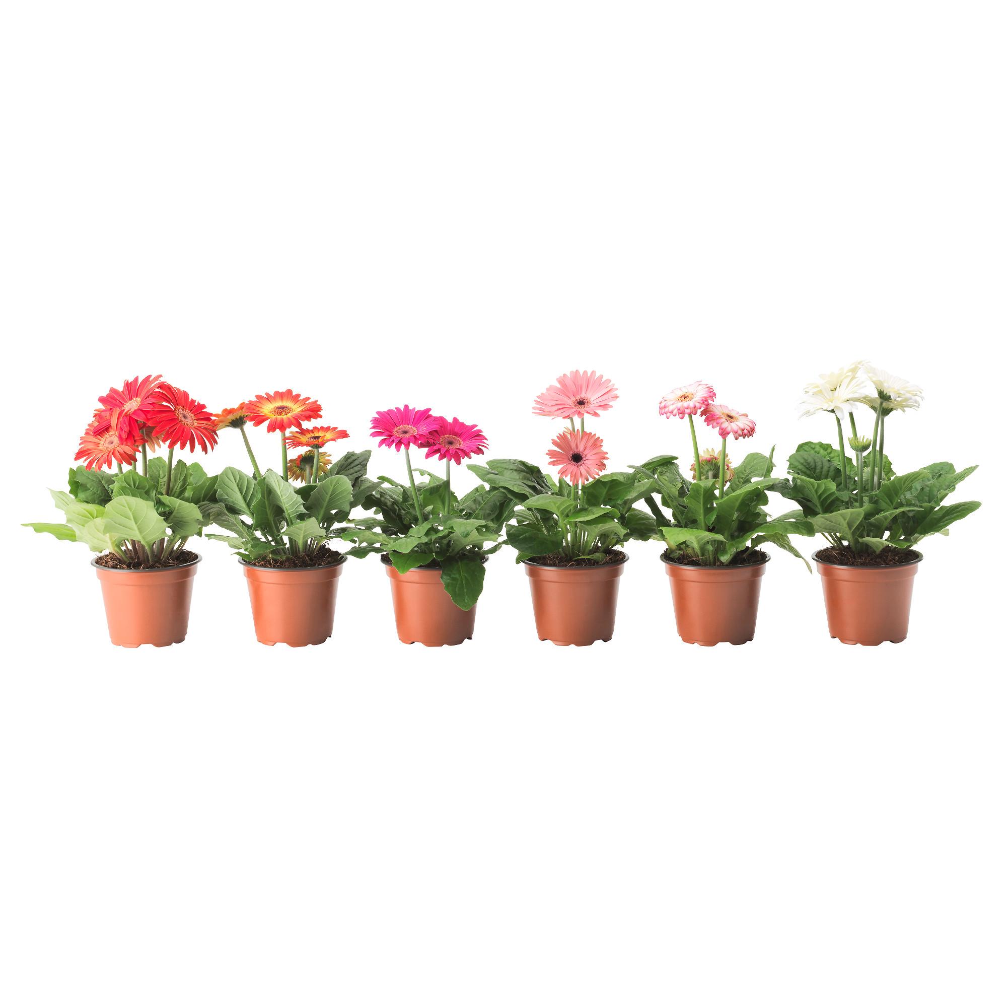 Купить цветы в горшке витебск
