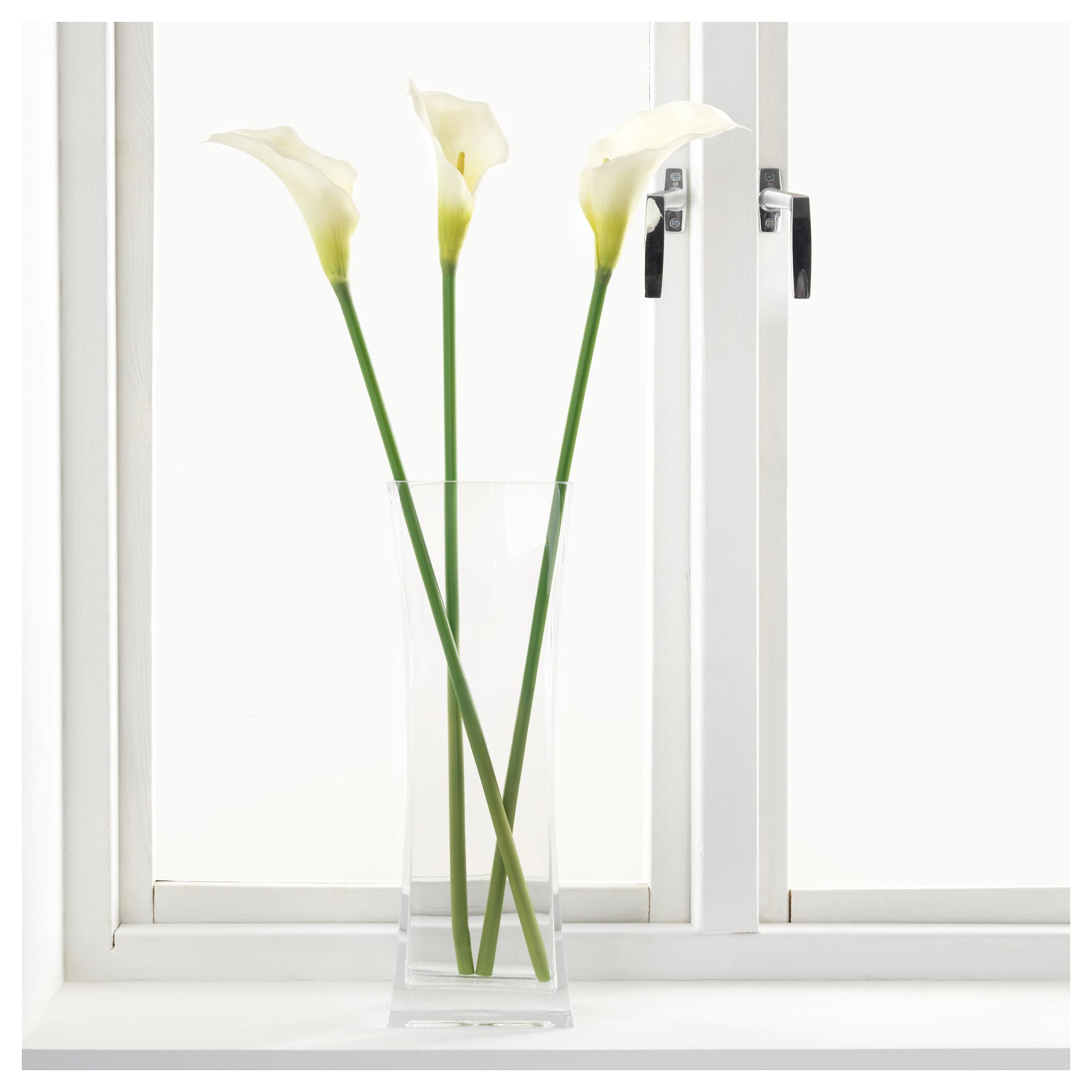 Каталог комнатных растений  комнатные цветы с фото и