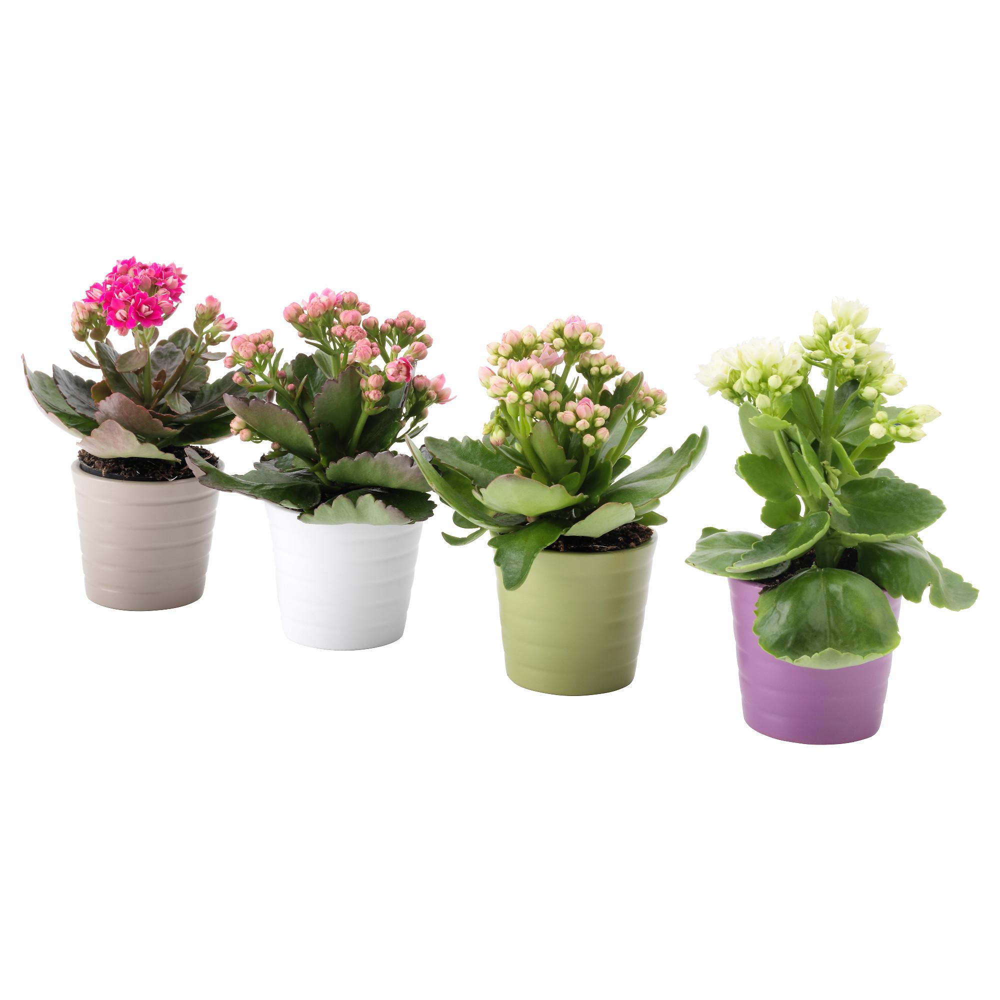 Купить цветы в горшке витебск, композиция