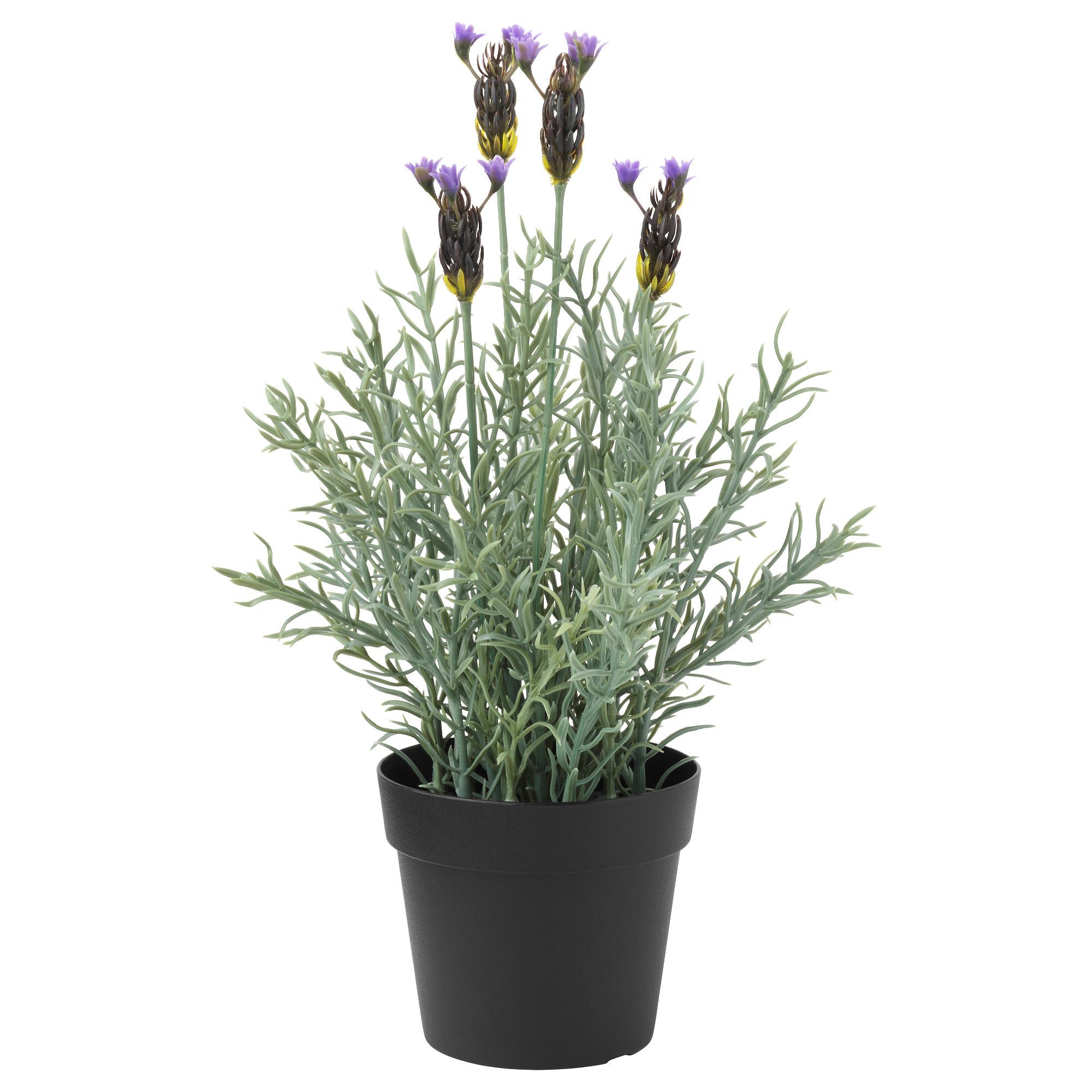 Искусственное растение в горшке ФЕЙКА артикуль № 303.397.78 в наличии. Online магазин IKEA РБ. Недорогая доставка и монтаж.