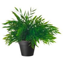 Искусственное растение в горшке ФЕЙКА артикуль № 003.719.58 в наличии. Онлайн сайт IKEA Республика Беларусь. Недорогая доставка и соборка.