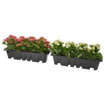 Растения для цветочного ящика ВЭКСТЛИГ артикуль № 803.505.13 в наличии. Интернет магазин IKEA РБ. Недорогая доставка и соборка.