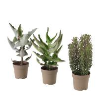 Растение в горшке KALANCHOE MADAGASCAR артикуль № 403.753.51 в наличии. Онлайн магазин IKEA Минск. Быстрая доставка и соборка.