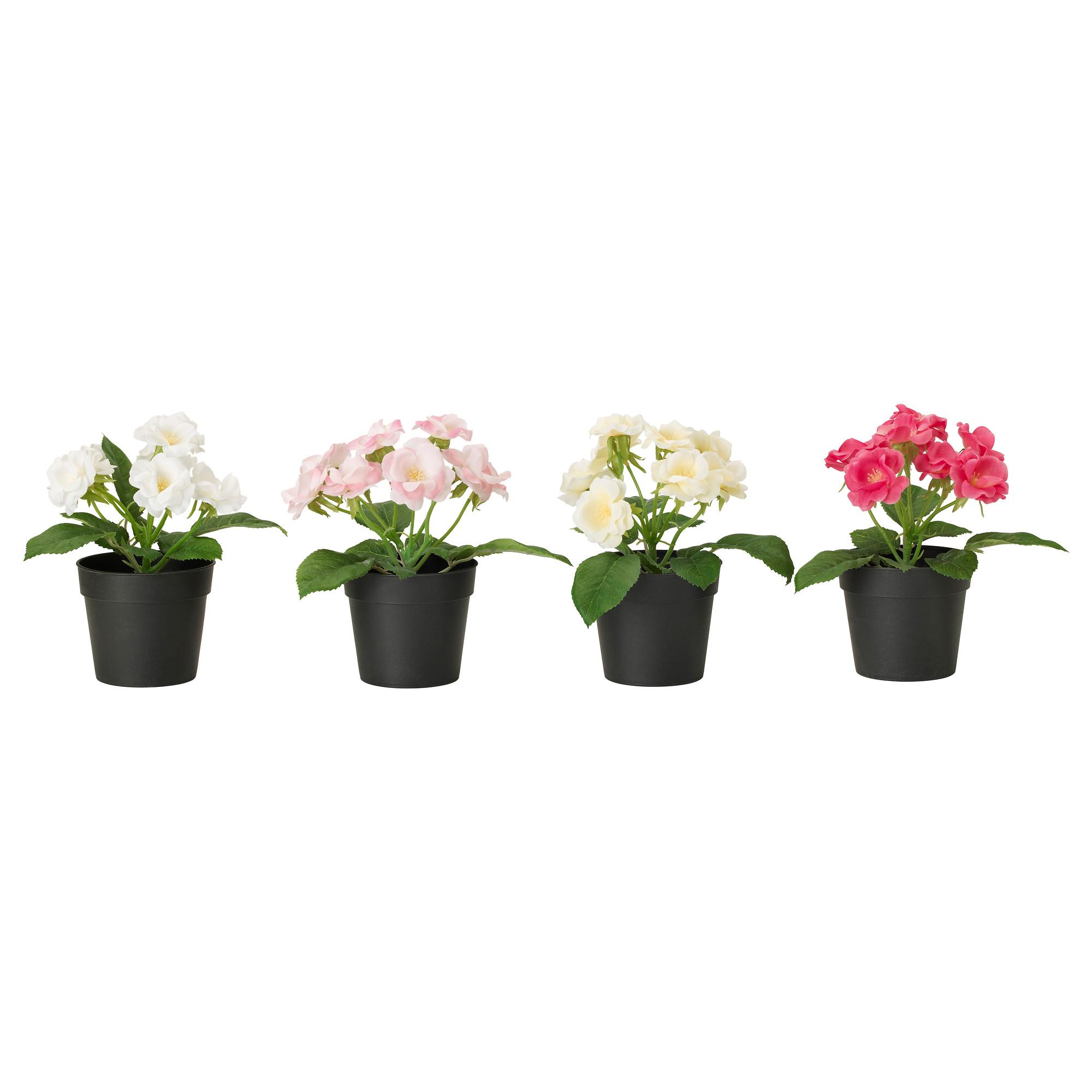 Цветы горшках доставкой минск купить искусственные цветы из ткани оптом