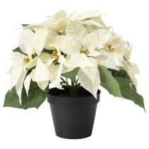 Искусственное растение в горшке ФЕЙКА белый артикуль № 203.634.10 в наличии. Онлайн каталог IKEA РБ. Недорогая доставка и соборка.