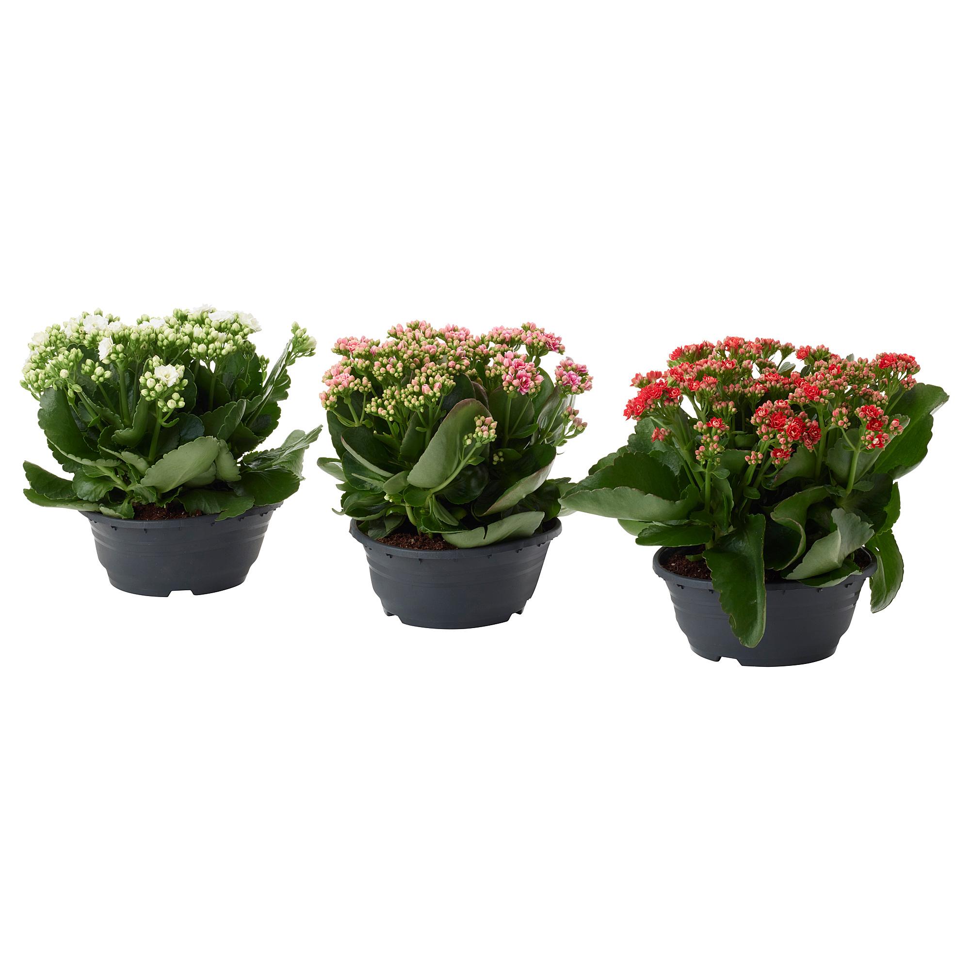 Купить цветы в горшках в саратове