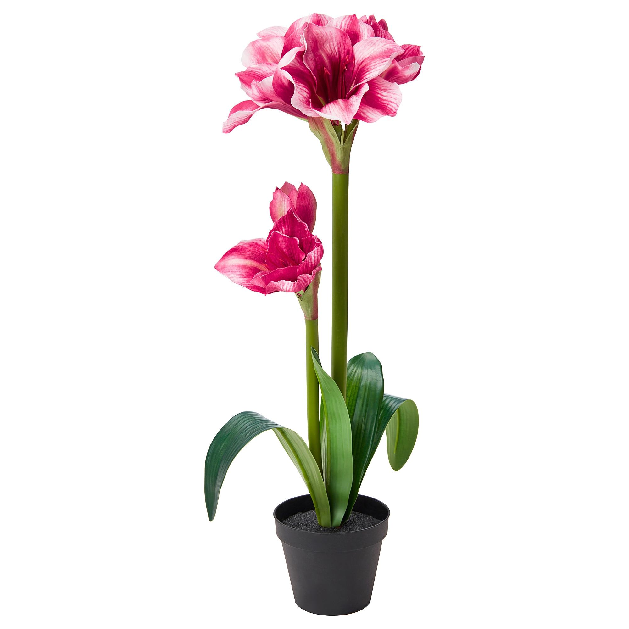 Искусственное растение в горшке ФЕЙКА розовый артикуль № 603.948.86 в наличии. Интернет сайт IKEA Беларусь. Недорогая доставка и установка.