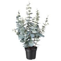 Искусственное растение в горшке ФЕЙКА артикуль № 904.195.50 в наличии. Онлайн сайт IKEA Беларусь. Быстрая доставка и соборка.